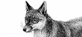 Fuchs und Igel