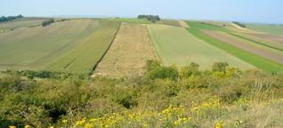 Ein grünes Band zur Rettung der Artenvielfalt in Europa