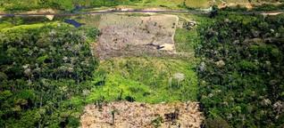Tag der Tropenwälder: Großrodung und illegales Schiffs-Holz