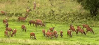 Jagd und Artenvielfalt : Weniger Verbiss und mehr Naturschutz