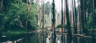 Ökoakustik - So klingt der Klimawandel
